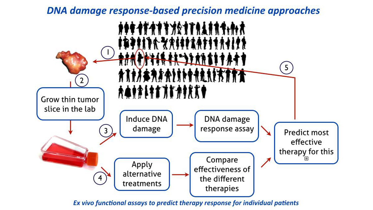 BMW-MG-Kanaar-DNA-damage-response-based-precision-medicine-approaches